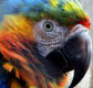 Portrait of parrot in tropical Costa Rica